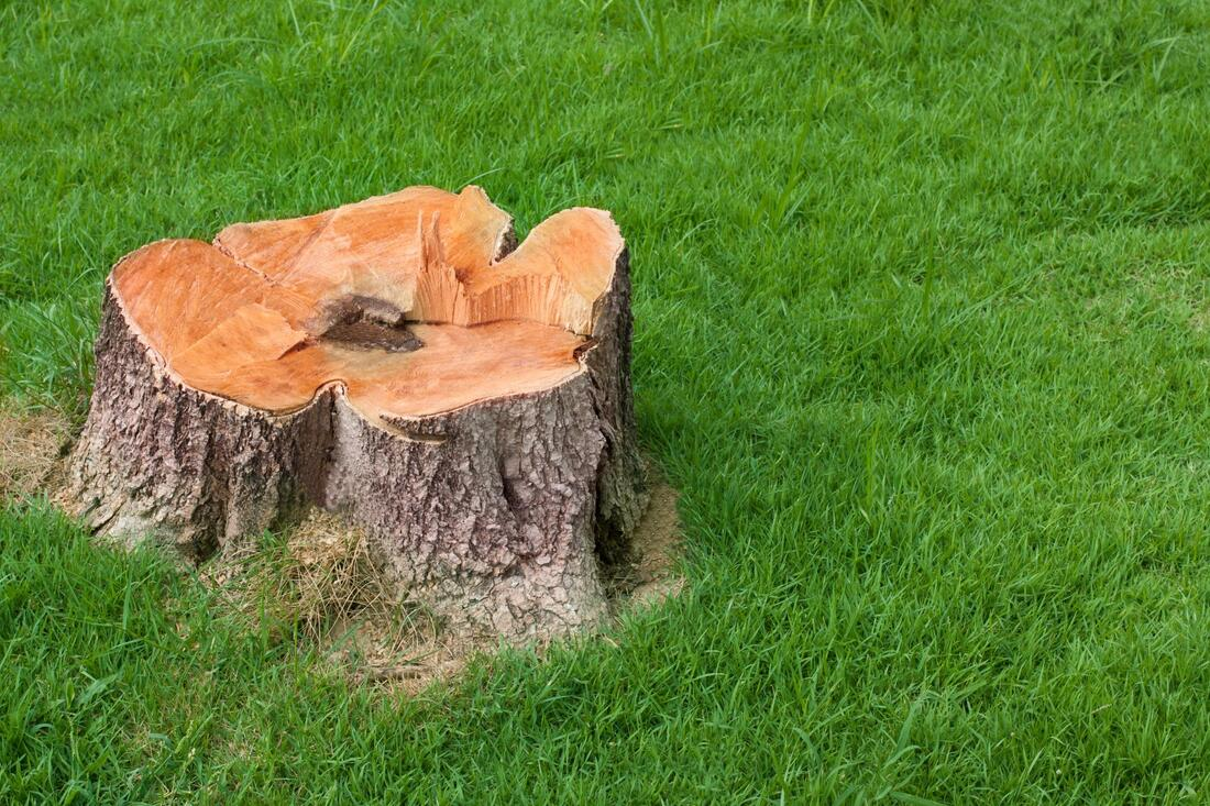 a stump on the ground